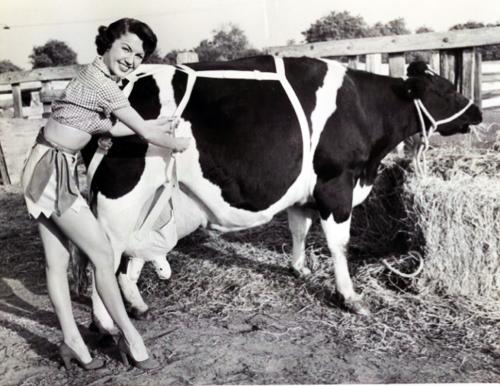cow bra