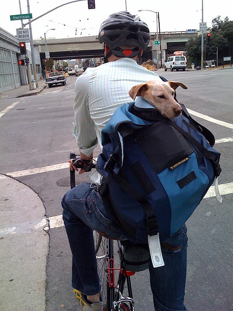 Dog to Work