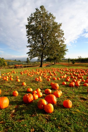 Best Pumpkin Patches in the Houston Area