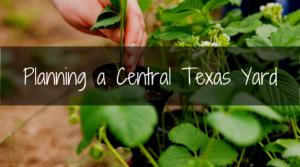 Central TX yard