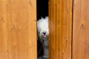 Doggie Door Do's and Don'ts