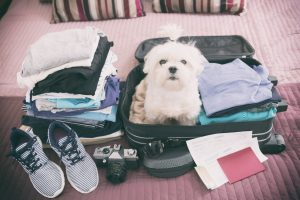 Moving Tips: Flying with Pets